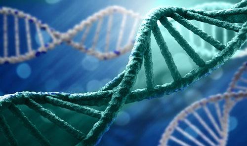 Genetika - Ispitivanje genoma