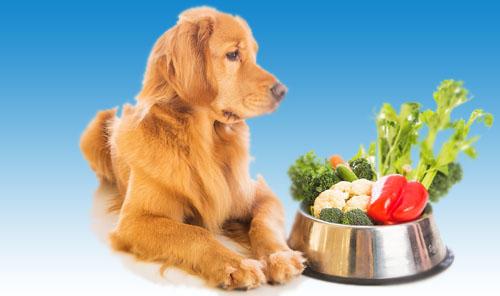 Terapija pravilnom ishranom